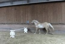 Funny Horses!!!