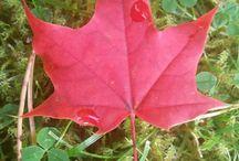 Syksy, autumn, herbst, höst