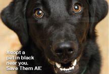 Animal Welfare Social Inspiration