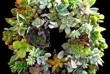 Succulent Obsession / by Kriselie Monserrate
