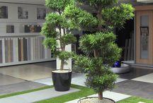 Grote Groene Planten / Grote Groene planten voor het interieur
