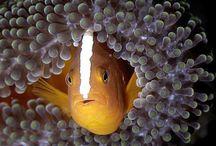 INSPIRATION-Under Water