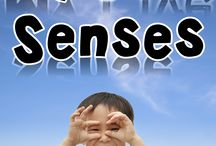 Five sense / by Erika Kander