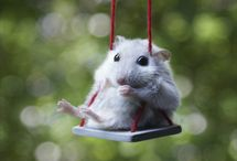 Hamsters :-*