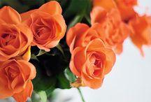 flowers and plants / by Louisa Keyner