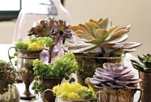 succulents / by Bev Titus