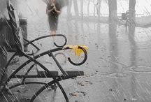 Sweet Rain...