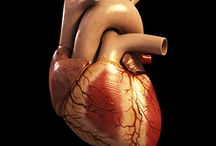 Heart Surgery / http://medical.miragesearch.com/treatment/heart-surgery-cardiac-treatment  Mirage Healthcare provide Treatment where you need with good price & facility.   Treatment Or Advice Contact Call Now: +919711586419 Email: info@miragesearch.com
