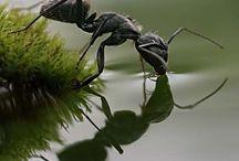 bugs stuff