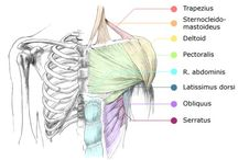 Anatomy and massage / by Danielle Ott