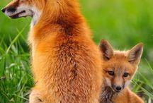 f o X / Every thing foxy!