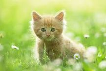 Cute animals / Here are some pics of animals that I fell in love with as soon as I saw them