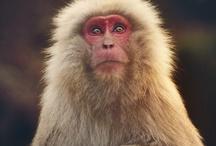 Monkey Reference
