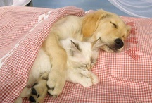 For The Love of Pets / by Janice Hutchinson