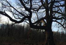 Pelham Bay Park / Nature in the Bronx