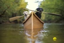 Pets and Canoes