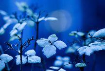 синий / цвет
