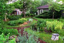 Ági permaculture