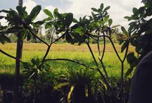 Bali is a paradise