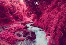 SEAN LYNCH // Infrared Photography
