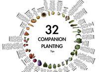 plantings tips