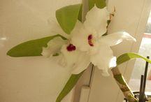 Moje květena