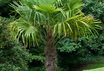 Hardy Poolside Plants & Trees / Poolside landscaping plants for the North
