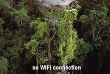 domy na drzewach / wyszukujemy domy na drzewach, jeśli znacie autorów lub macie swoich faworytów, zapraszamy do dodawania swoich faworytów