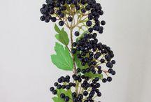 калина (viburnum)