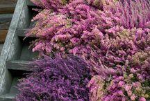 Blomster Om Høsten