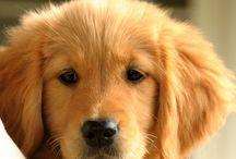 Ellie / I love dogs