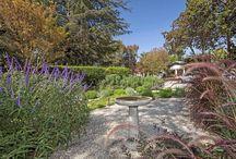 karen tandy grows / Gardening, growing vegetables and succulents, urban gardening, drought tolerant landscaping.
