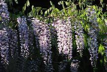 Ogród / dekoracje do ogrodu, rośliny, kwiaty w ogrodzie, DiY w ogrodzie