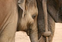 E comme elephant
