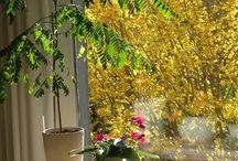 Wohnen mit Pflanzen / Mit Pflanzen Räumen Charakter geben