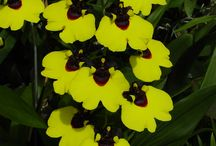 Nuestras Orquídeas, Carnívoras, Bromelias y otras plantas / Producción de orquídeas en Orquifollajes - Medellin. Colombia.