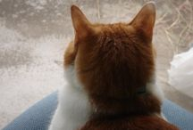 猫の後頭部