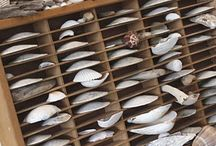 shells- display