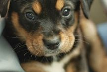 Puppies / Cute and hilarious dogs....