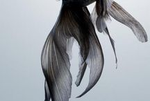 Глубоководное существо