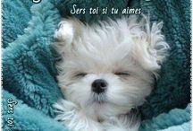 bonne nuit bonne soirée
