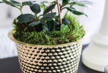 Växter/krukor
