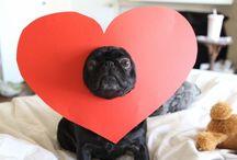 funny pet photos / by Belén
