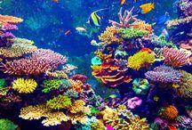 Submarinismo y vida en el mar