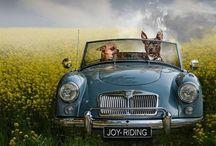 Fun fun fun / by Sarah Helbingen Soruco