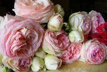 Fleur / by Rosemary Watson