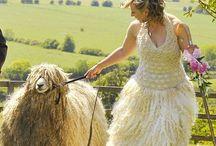 Lanosità / Tutta la lana che c'è