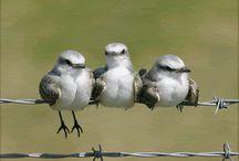 Birds / by Sandy Bobet