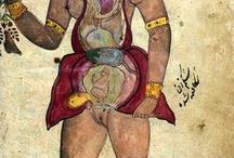 Anatomická illustration