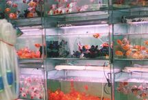 fishes°